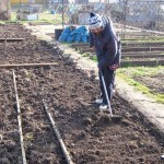 Working on the allotment 27.2.13