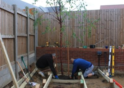 Planting the Tibetan cherry within the deck