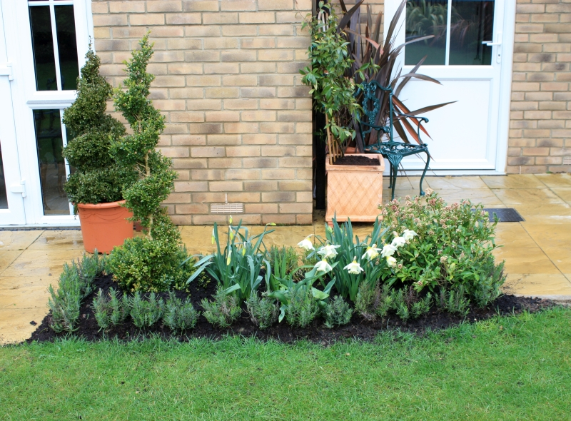 Bringing colour to new build garden borders