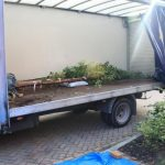 web-tree-delivery-day