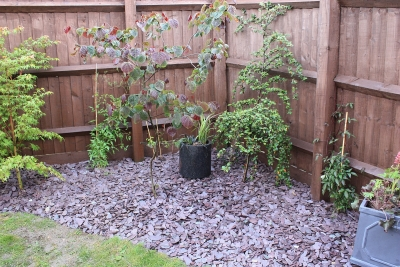 Stotfold low maintenance garden