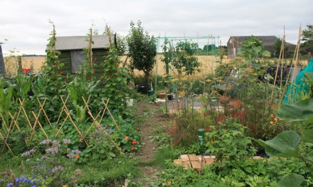 Planting for pollinators and your plate