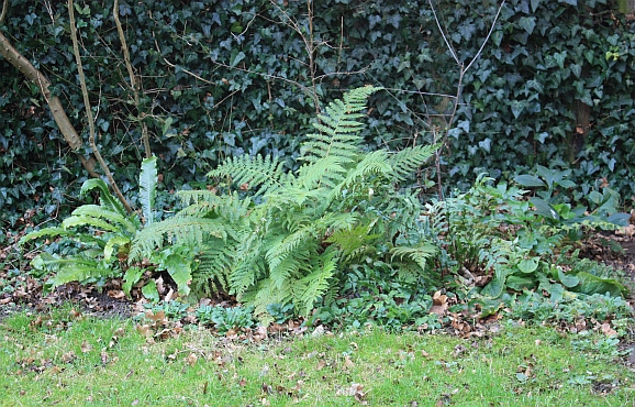 Ferns for all seasons..