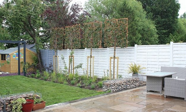 Planting pleached trees